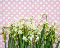 Las primeras flores de la primavera en papel Fotografía de archivo