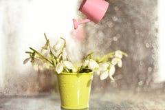 Las primeras flores de la primavera en un pequeño mini cubo y un mini riego imagenes de archivo