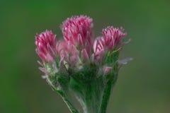 Las primeras flores de la primavera florecen en jardines y parques foto de archivo libre de regalías
