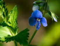 Las primeras flores del resorte Foto de archivo