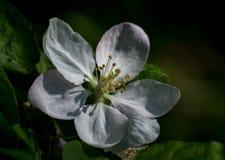 Las primeras flores del resorte Fotografía de archivo libre de regalías