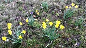 Las primeras flores del resorte Fotos de archivo