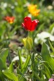 Las primeras flores en el jardín de la primavera Fotos de archivo