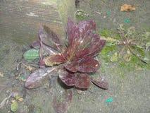 Las primeras plantas en primavera Fotos de archivo libres de regalías