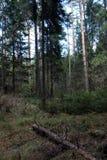 Las profundidades del bosque del pino de un bosque viajan a través de las trayectorias de bosque T Imágenes de archivo libres de regalías