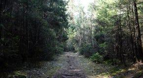 Las profundidades del bosque del pino de un bosque viajan a través de las trayectorias de bosque T Fotos de archivo libres de regalías