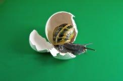 Caracol en huevo Foto de archivo libre de regalías