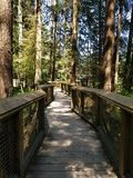 Las przy Capilano mostem Fotografia Royalty Free