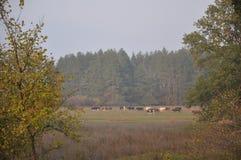 Las przy dniem obrazy royalty free