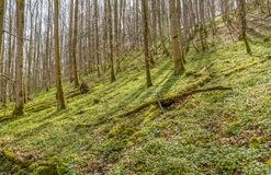 Las przy hillslope Fotografia Stock