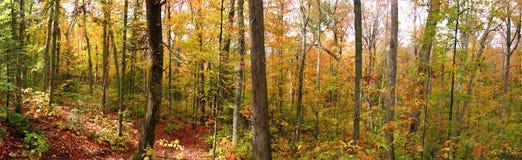 Las przy Indiańskim latem Zdjęcie Stock