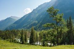 Las przy Kucherla Fotografia Royalty Free