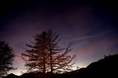 Las przy nocą z grającym główna rolę niebem Zdjęcie Royalty Free