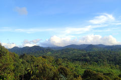 Las przy Zewnętrznym Badui plemieniem Zdjęcie Royalty Free