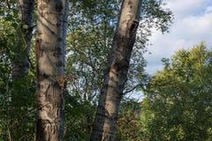 Las przy zmierzchem Zdjęcia Royalty Free