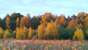 Las przy zmierzchem Fotografia Stock