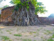 Las raíces alrededor de la cabeza de Buda imágenes de archivo libres de regalías