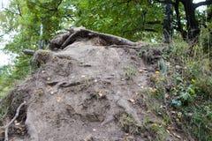 Las raíces de árboles en la tierra con el musgo Fotografía de archivo libre de regalías