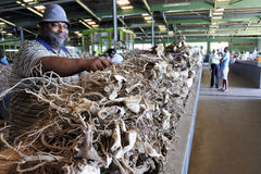 Las raíces de la venta del hombre del Fijian de la planta de la pimienta en el mercado utilizaron a imagen de archivo libre de regalías