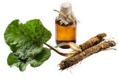 Las raíces y las hojas de la bardana, aceite de la bardana en botella foto de archivo