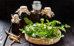Las raíces y las hojas del diente de león, del tinte y del jarabe en botellas Fotos de archivo libres de regalías