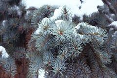 Las ramas atavían el azul con nieve, como fondo Pequeña profundidad del campo, efecto de la película, foco selectivo Fotos de archivo