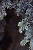 Las ramas atavían el azul en fondo oscuro Pequeña profundidad del campo, efecto de la película, foco selectivo Imágenes de archivo libres de regalías