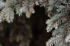 Las ramas atavían el azul en fondo oscuro Pequeña profundidad del campo, efecto de la película, foco selectivo Fotos de archivo