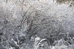 Las ramas congeladas fondo del invierno Imágenes de archivo libres de regalías