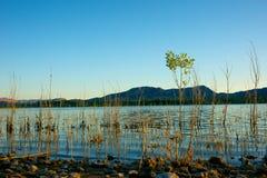 Las ramas crecen del agua Fotografía de archivo