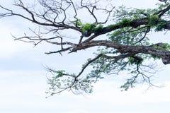 las ramas de árbol crecen imagen de archivo libre de regalías