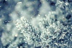 Las ramas de árbol de pino cubrieron helada en atmósfera nevosa foto de archivo libre de regalías