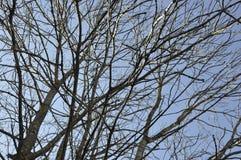 Las ramas de árbol en el cielo de Sinaia recurren en Rumania Fotografía de archivo