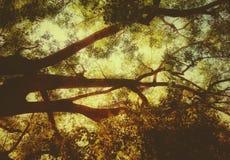 Las ramas de árbol hermosas con el fondo del cielo de la puesta del sol parecen artísticas fotografía de archivo