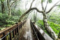Las ramas de árbol se entrelazan en un bosque mojado fotos de archivo