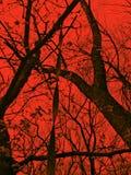 Las ramas de árboles en el espectro rojo y la cuerda cuelgan abajo, fondo para Halloween Foto de archivo