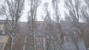 Las ramas de árboles se cubren con nieve nevadas metrajes