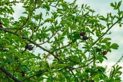 Las ramas de la perro-rosa con las hojas jovenes imágenes de archivo libres de regalías