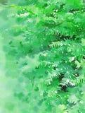 Las ramas de la picea en un fondo verde stock de ilustración