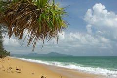 Las ramas de las palmas de coco contra el cielo azul claro Fotografía de archivo libre de regalías