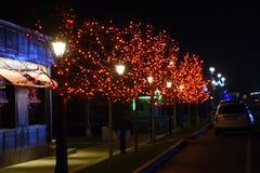 Las ramas de los árboles de la calle, adornadas con las luces rojas Fotografía de archivo libre de regalías