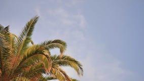 Las ramas de una palmera contra el cielo azul almacen de video