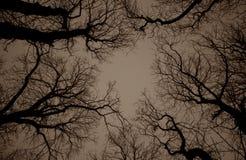 Las ramas del árbol Fotos de archivo