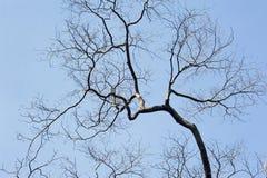 Las ramas del árbol deshojado renacidas con la primavera Imagenes de archivo
