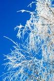 Las ramas del árbol durante el invierno Foto de archivo libre de regalías
