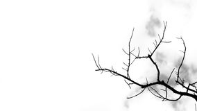 Las ramas del árbol en el fondo blanco Fotos de archivo