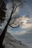 Las ramas del abedul guardan el sol en la orilla nevosa del lago Baikal Fotografía de archivo libre de regalías