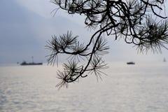 Las ramas del pino al borde de los lagos Foto de archivo
