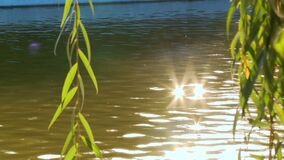 Las ramas del sauce cuelgan en el fondo del resplandor del agua del agua metrajes