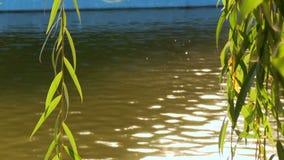 Las ramas del sauce cuelgan en el fondo del resplandor del agua del agua almacen de video